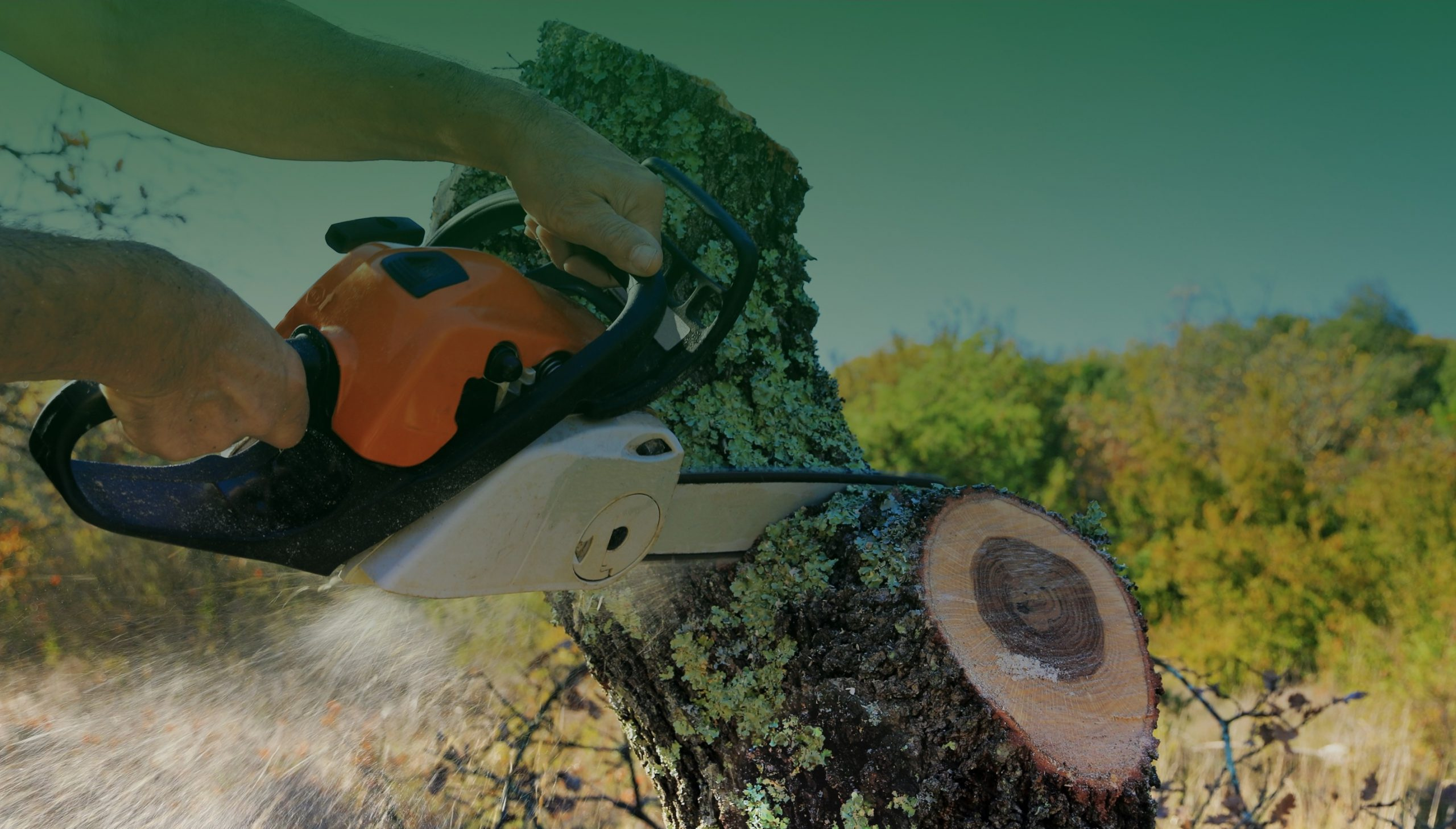 Tree Loppers BrisbaneColourful Tree Services